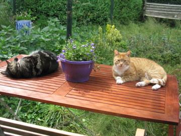 Katten Afschrikken Tuin : Katwaardig praktijk voor kattengedragstherapie home